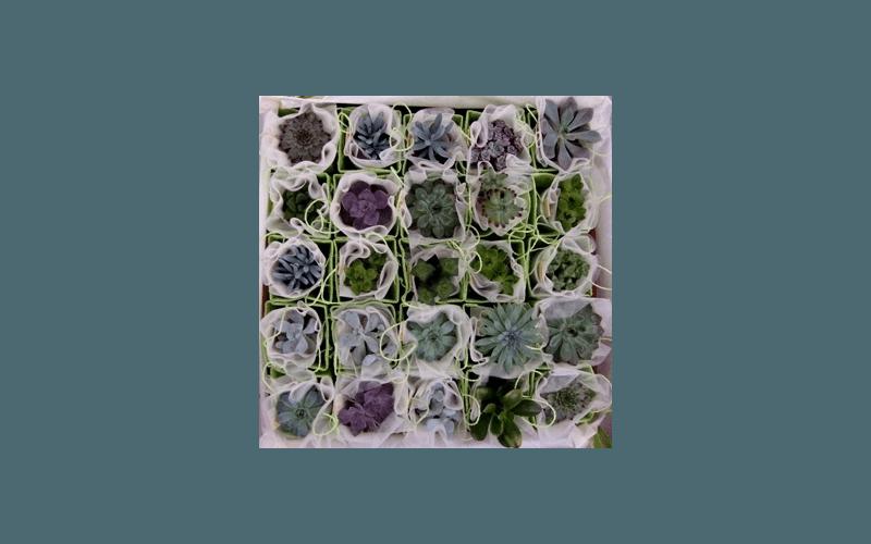 bomboniere fiori