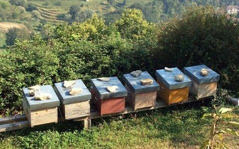 Il miele e le api