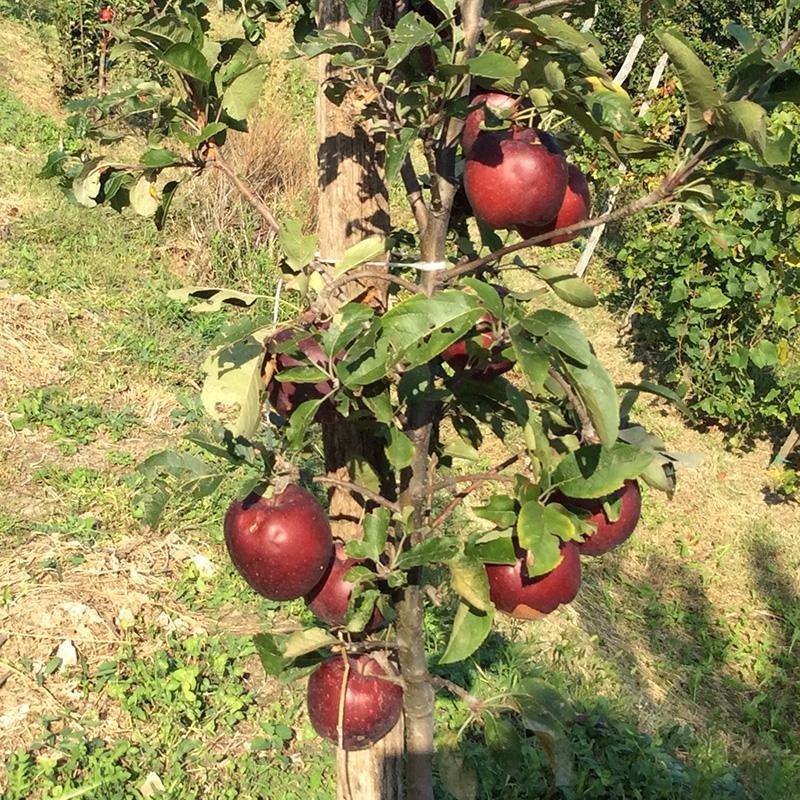 vendita frutta e verdura di stagione