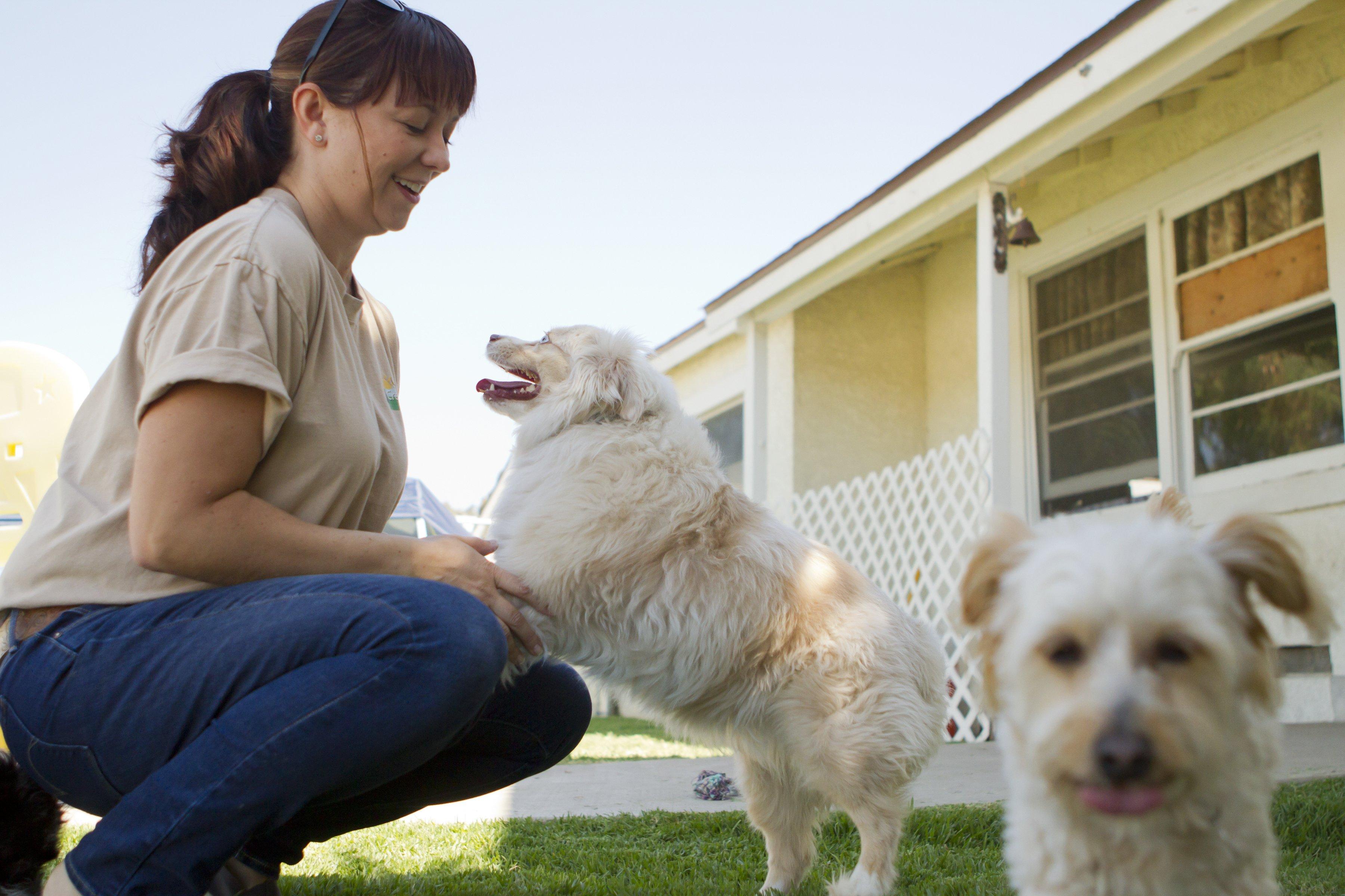 Dog caretaker