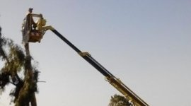 manutenzione alberi, piante ad alto fusto, manutenzione piante