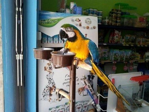 Il nostro pappagallo