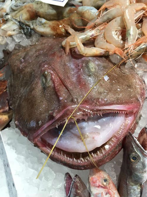 Crudità di mare o grigliata di pesce?