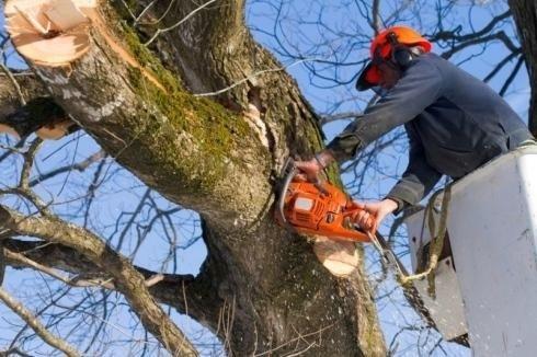potature ed abbattimento alberi alto fusto