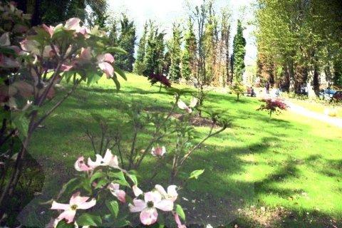 realizzazione e manutenzione giardino