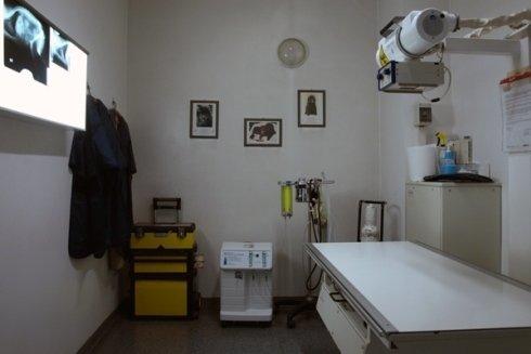 radiologia veterinaria, esami radiologici per cani, diagnosi con strumentazioni
