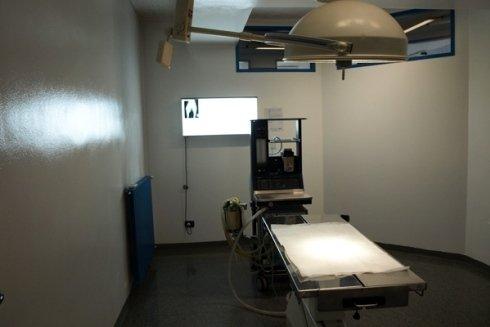 sala operatoria veterinaria, interventi chirurgici, trattamenti per animali