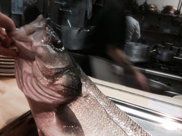 Pesce di qualità