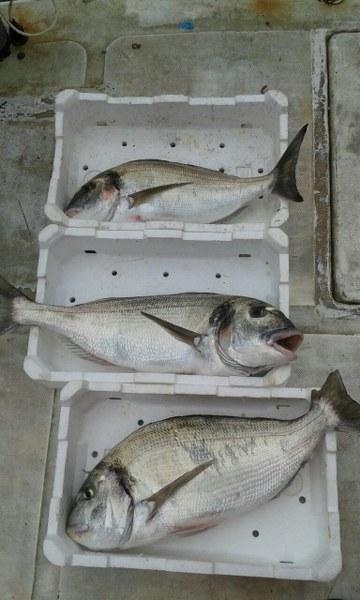 Pesce di giornata