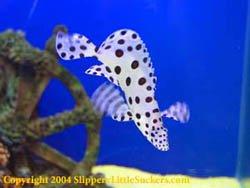 Beautiful marine fish
