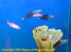 Impressive selection of marine fish