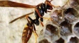 disinfestazioni vespe
