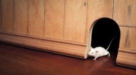 topi, ratti, servizi di derattizzazione