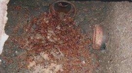 eliminazione blatte, eliminazione insetti, eliminazione scarafaggi