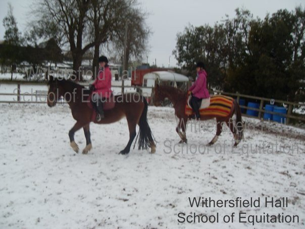 horse riding show