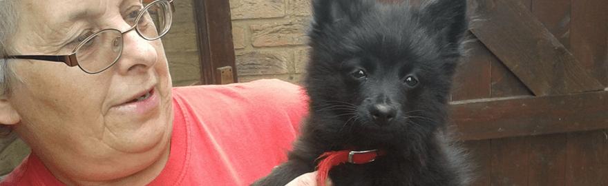 Elms Boarding Kennels For Dogs