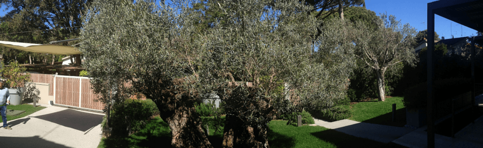 vista frontale di alberi in un giardino