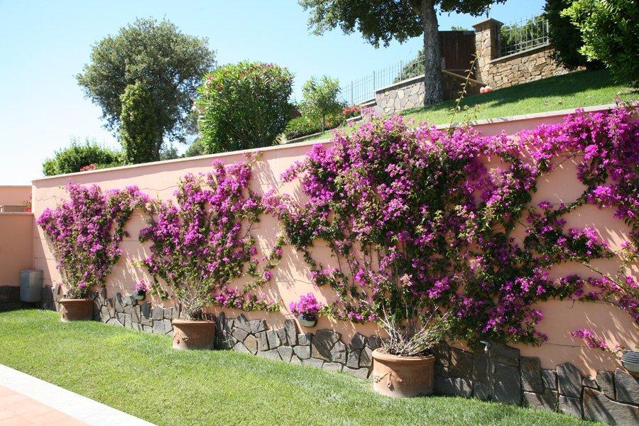 muro con fiori