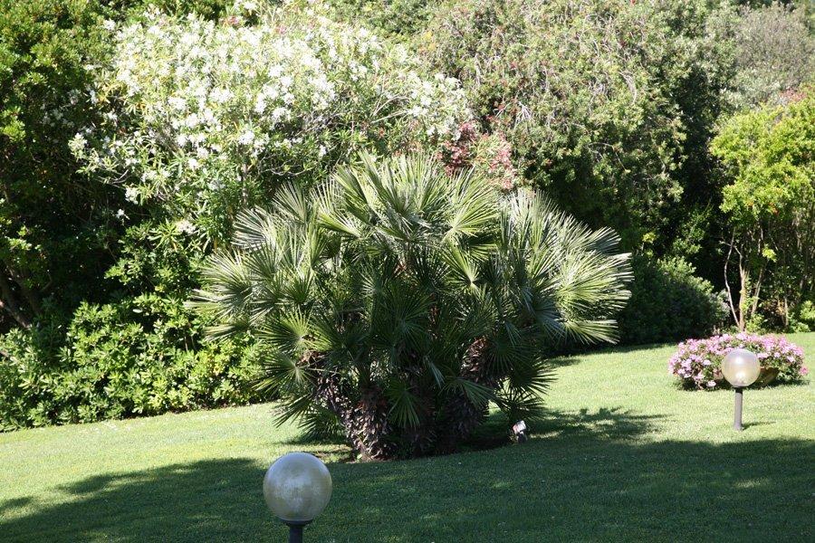alberi e cespugli in giardino