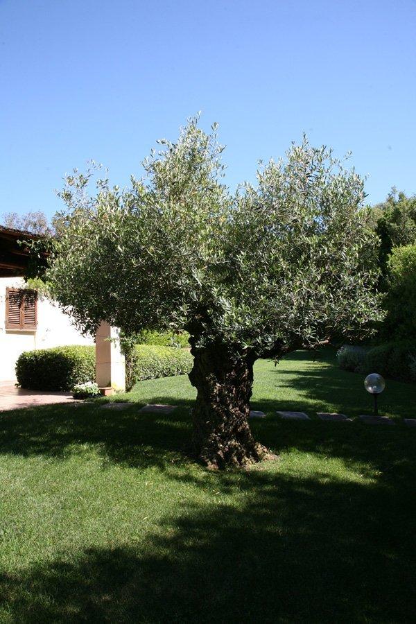 vista frontale di un albero in giardino