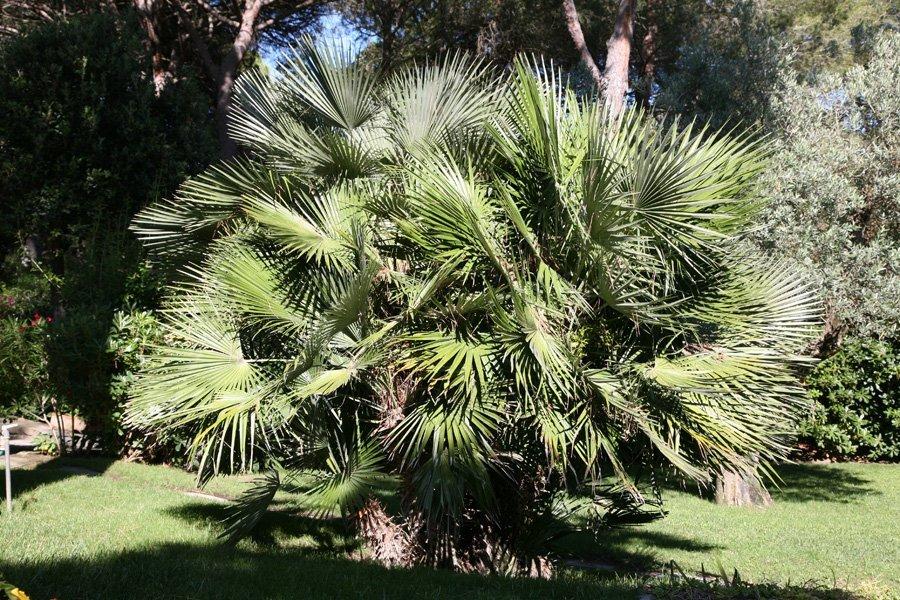 vista frontale albero con foglie a punta