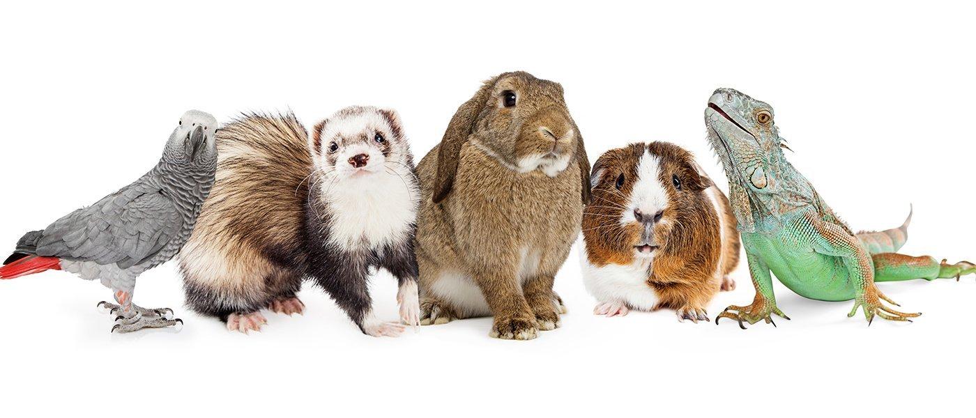 gruppo di animali tra cui coniglio, criceto, camaleonte e furetto a Badia polesine