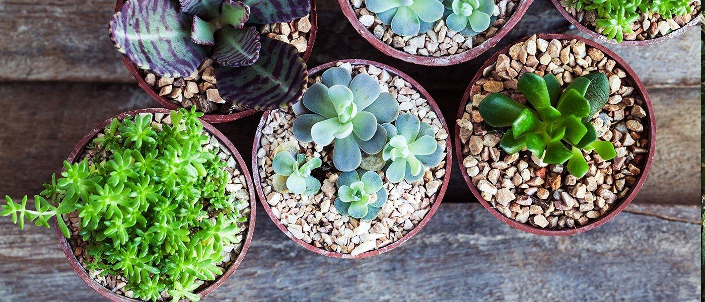 foto di vasi fatta dall'alto