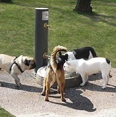 linea-dogy-box
