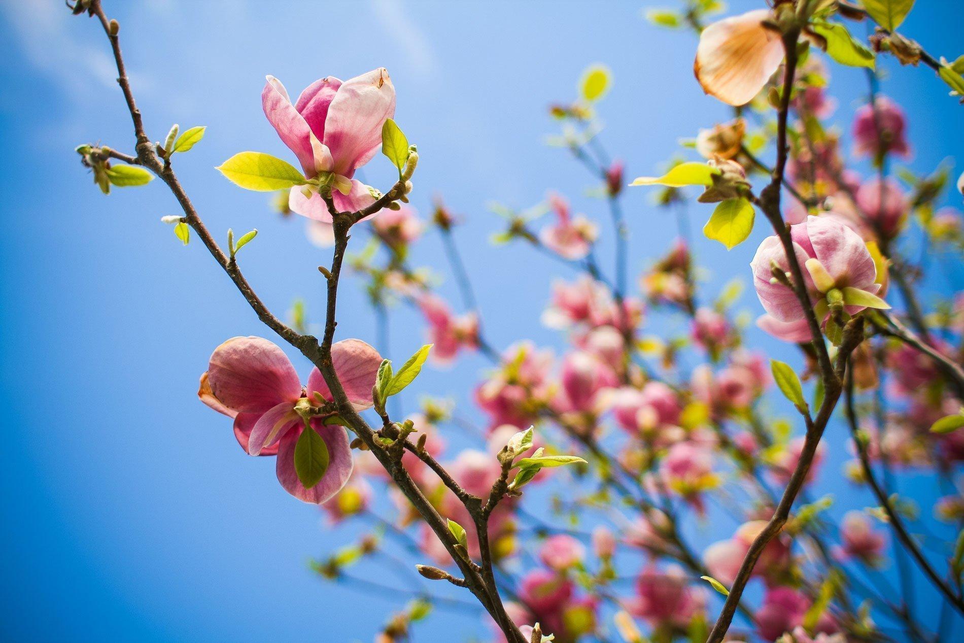 lifesway2short, Springtime Offers, teindaloroazul.com