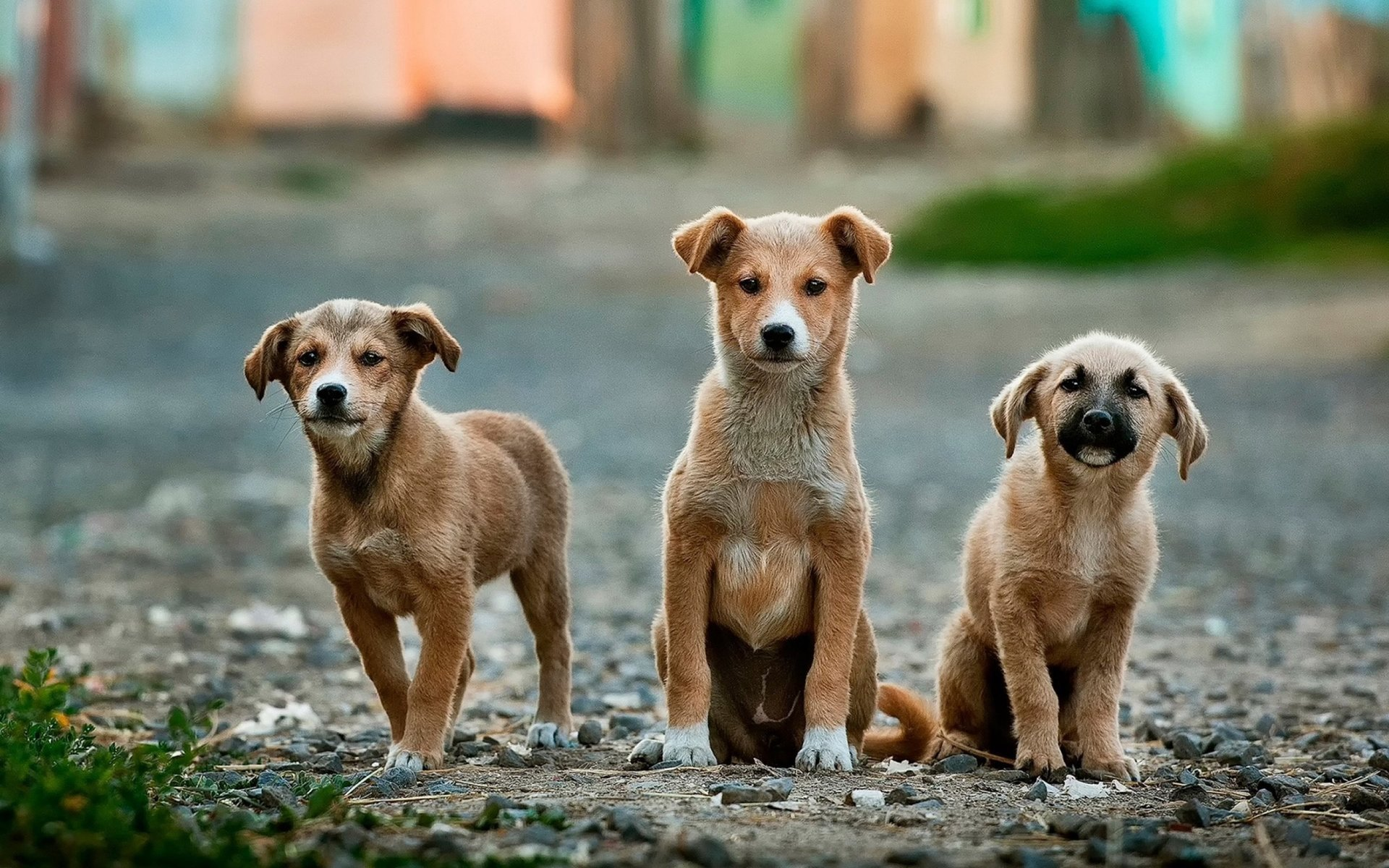 Three Cute Puppers