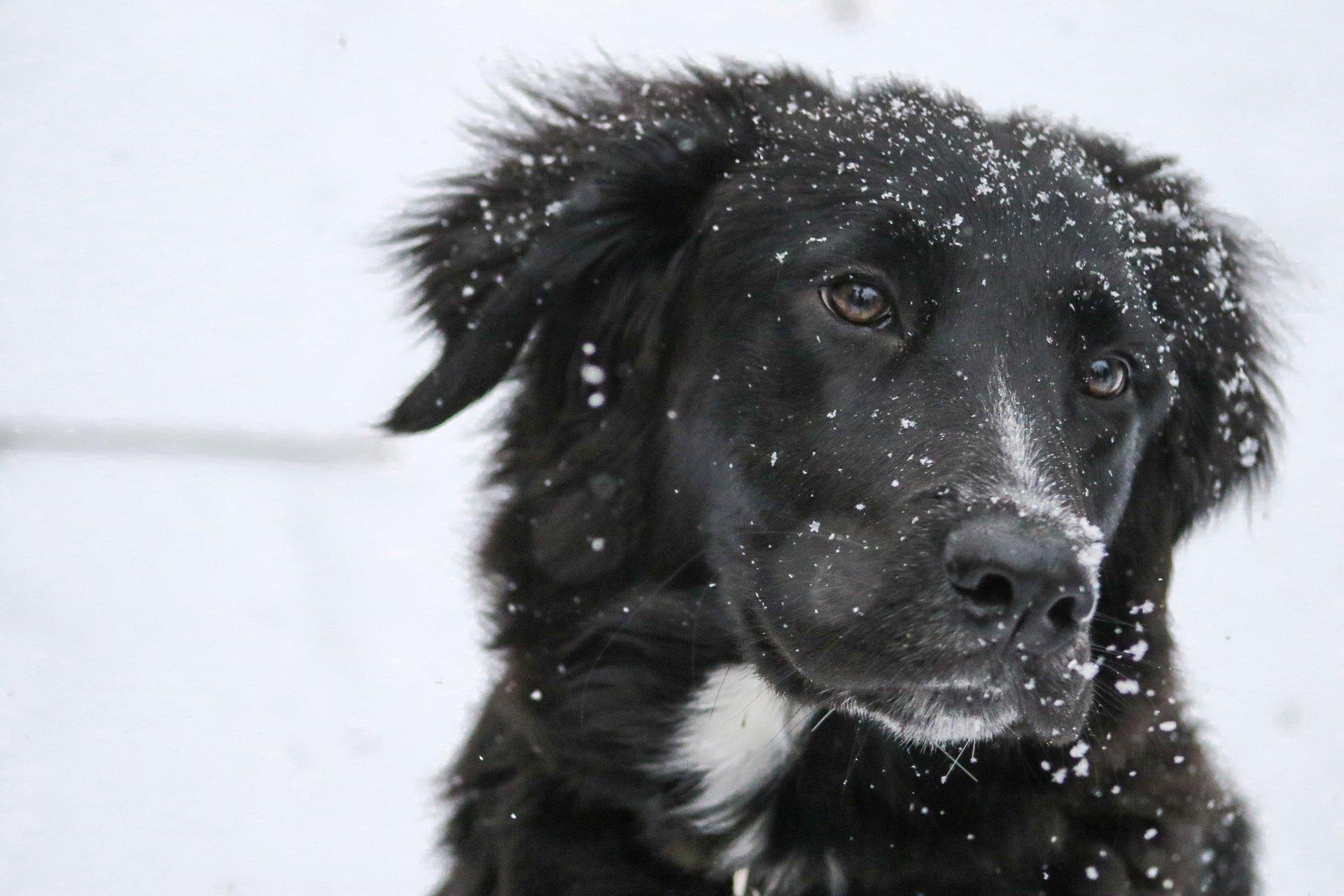 Doggo in the Snow