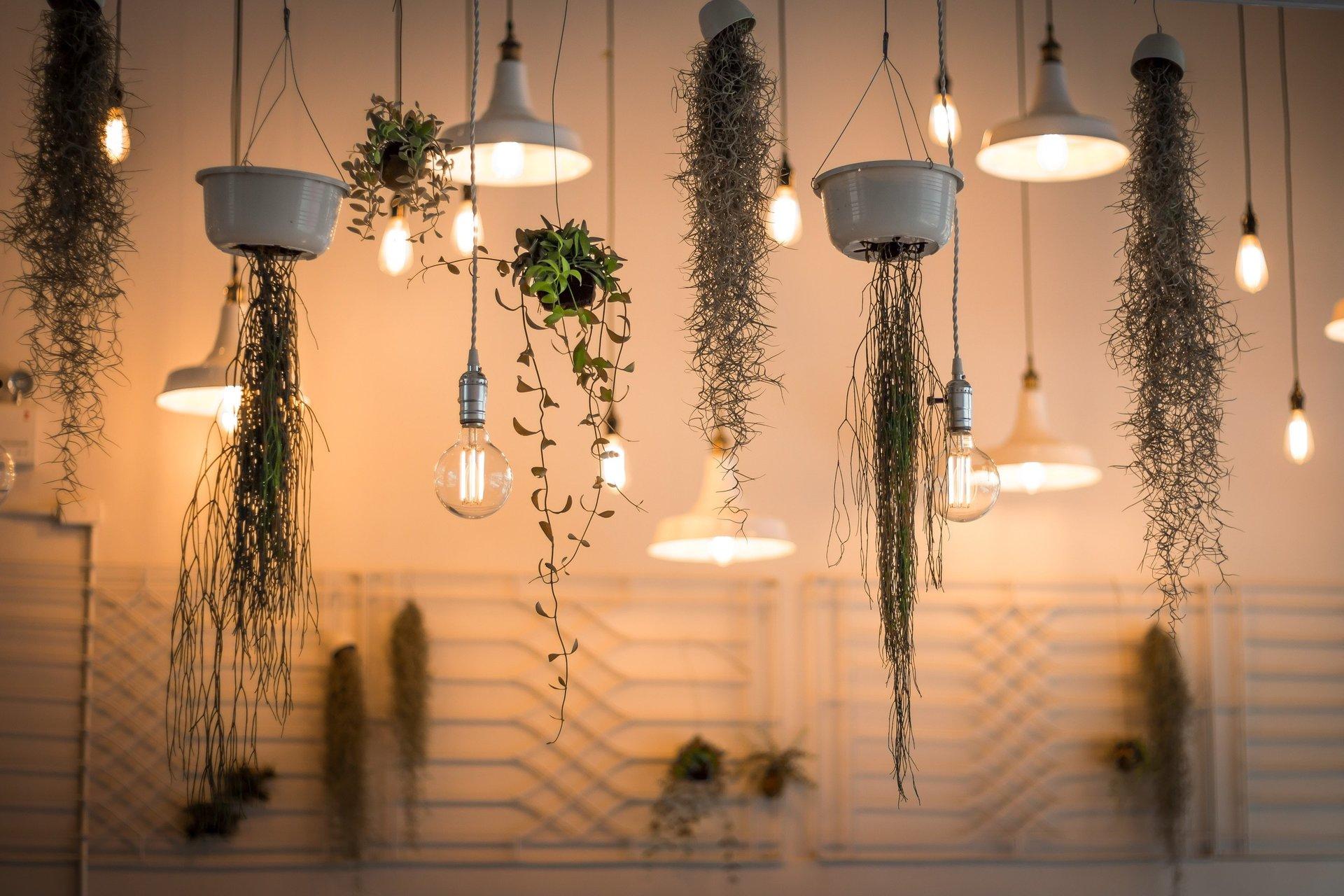 lampadari moderni e piante in sospensione