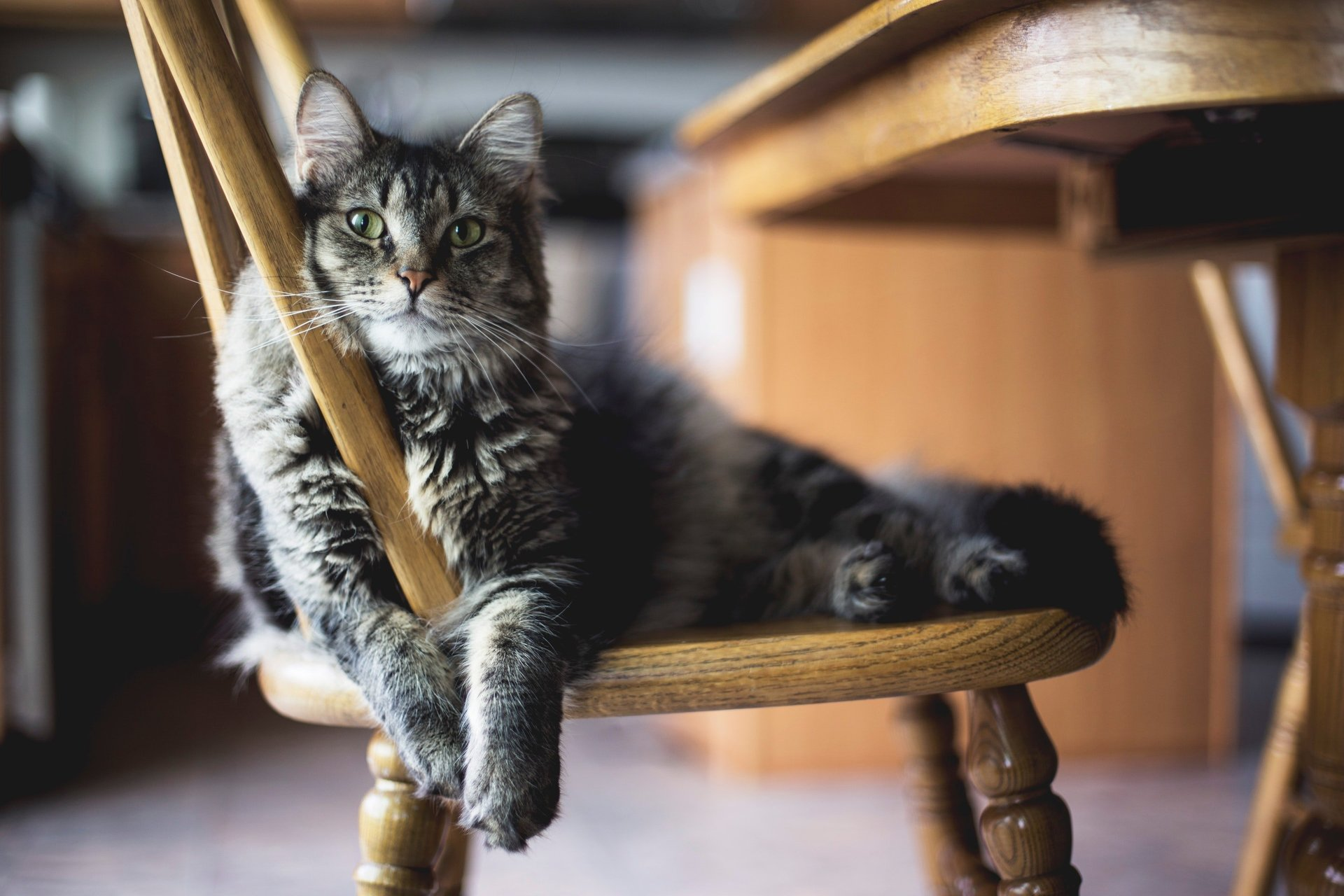 A Cat Lounging on a Chair