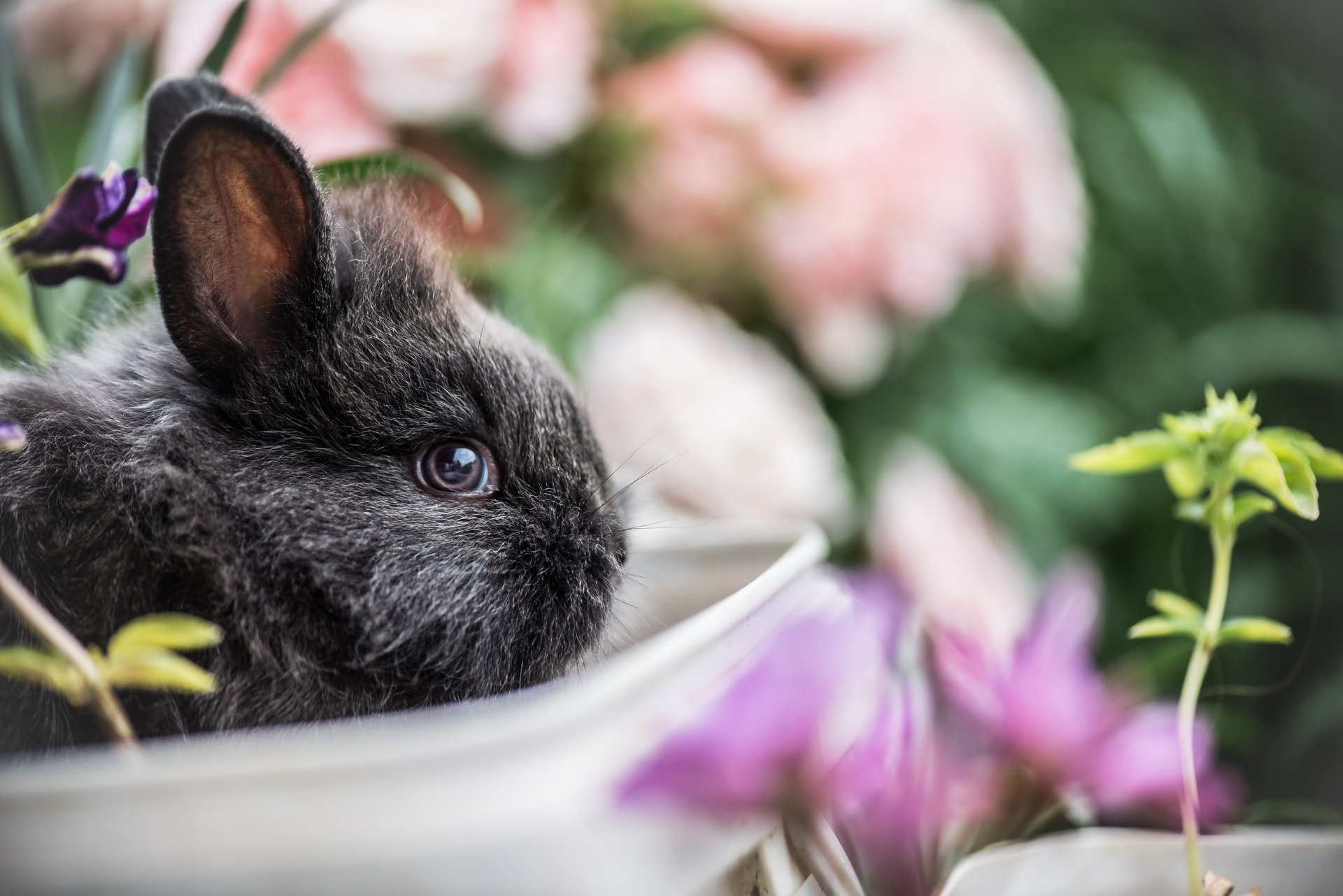 A Rabbit Sitting in Flowers